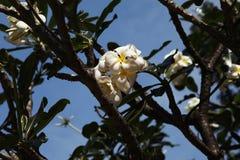 热带美丽的花 库存图片