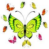 热带美丽的蝴蝶 库存照片