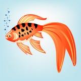 热带美丽的鱼 库存图片