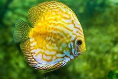 热带美丽的鱼 免版税图库摄影