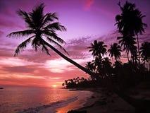 热带美好的日落 免版税图库摄影