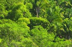 热带背景的密林 库存照片