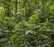 热带背景的森林 库存图片