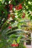 热带背景的花 免版税库存照片