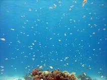 热带背景的鱼 免版税库存照片