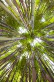 热带背景竹异乎寻常的深绿色 库存图片