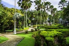 热带胡同的庭院 免版税库存图片