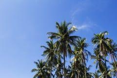 热带自然定了调子照片 与文本地方的异乎寻常的海岛假期横幅模板 免版税库存照片