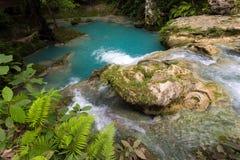 热带自然水池 库存图片