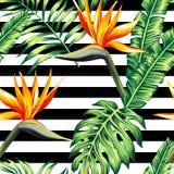 热带花卉无缝的背景 免版税库存照片