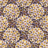 热带花卉的模式 画小花羽毛的水彩 重复背景的白色异乎寻常的花赤素馨花 免版税库存照片
