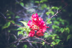 热带花卉的模式 异乎寻常的叶子和花 巴厘岛庭院 印度尼西亚 库存照片