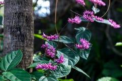 热带花卉的模式 异乎寻常的叶子和花 巴厘岛庭院 印度尼西亚 库存图片