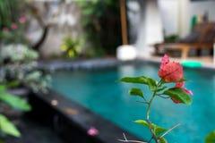 热带花卉的模式 异乎寻常的叶子和花 巴厘岛庭院 印度尼西亚 免版税库存图片