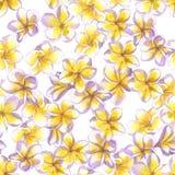 热带花卉的模式 被绘的水彩开花羽毛 重复背景的白色异乎寻常的花赤素馨花 免版税库存照片