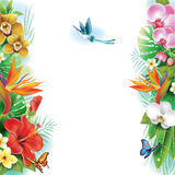 从热带花和叶子的边界 免版税图库摄影