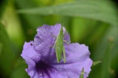 热带花和昆虫 巴厘岛 免版税库存图片