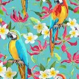热带花和鹦鹉鸟背景-火百合花 库存图片