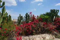 热带花园用仙人掌、棕榈和红色开花灌木 库存图片