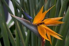 热带花在一个房子里在比利时 免版税库存图片