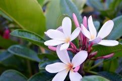 热带花在庭院里 免版税库存图片