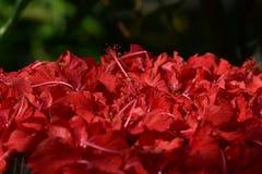 热带花在庭院里 库存照片