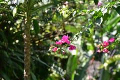 热带花在庭院里 库存图片