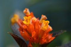 热带花在庭院里 免版税图库摄影