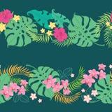 热带花无缝的水平的边界 库存照片