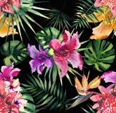热带花木槿兰花的美好的明亮的可爱的五颜六色的热带夏威夷花卉草本夏天样式和棕榈离开 库存例证