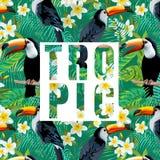 热带花的叶子 toucan的鸟 免版税库存图片