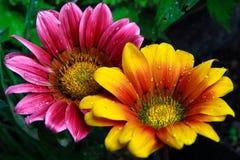 热带花的星期日 免版税图库摄影