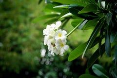 热带花的杏仁奶油饼 库存图片