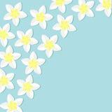 热带花象集合 在壁角羽毛赤素馨花夏威夷,巴厘岛植物花框架 背景看板卡祝贺邀请 平的设计 免版税库存图片