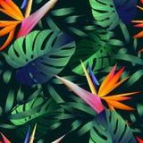 热带花,密林离开,天堂鸟花 皇族释放例证