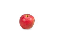 热带苹果计算机隔绝了 免版税库存照片