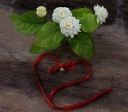 热带茉莉花花和响铃红色弓在木头 背景区别花茉莉花好的季节性主题 库存图片