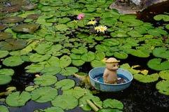 热带荷花池塘 免版税库存照片