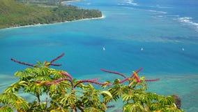 热带蓝绿色红色的辉煌 库存图片