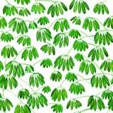 热带藤本植物,打印的无缝的样式 额嘴装饰飞行例证图象其纸部分燕子水彩 免版税图库摄影