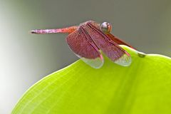 热带蜻蜓的雨林 库存照片