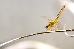 热带蜻蜓的雨林 库存图片