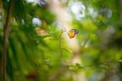 热带蝴蝶在密林 免版税图库摄影