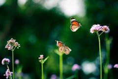 热带蝴蝶在密林 免版税库存图片