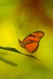 热带蝴蝶的叶子 免版税图库摄影