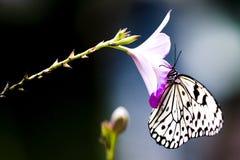 热带蝴蝶的雨林 图库摄影