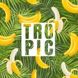 热带设计用香蕉和棕榈叶 织品的,海报,盖子夏天花卉异乎寻常的背景 库存照片