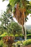 热带豪华雨林的手段 免版税库存图片