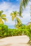 热带路、白色沙子和密林风景、棕榈和美洲红树自然 图库摄影