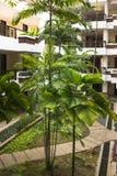 热带适应 图库摄影